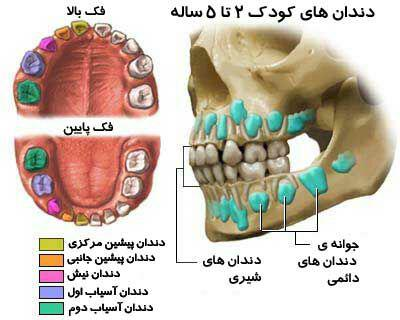 دندانهای شیری