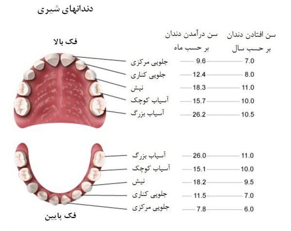 آشنایی با انواع و ساختار دندان